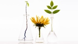 Phytochemistry: What, Why, and How