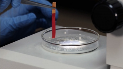 Working With Proteins