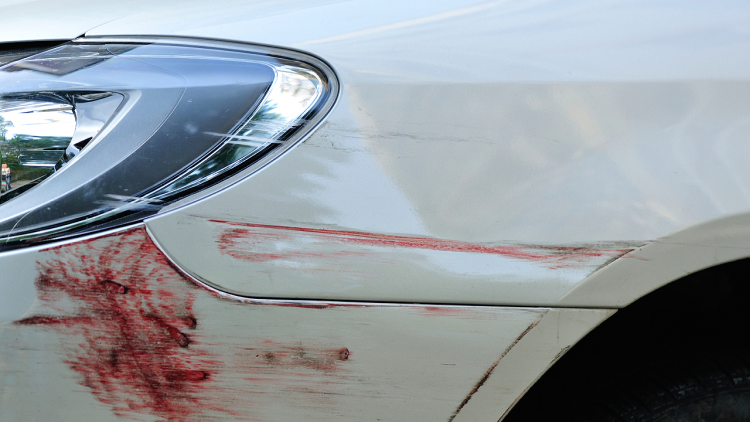 The Case of the Bloody Bumper